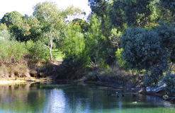 TThe duck pond at the Maggie Beer's Pheasant Farm farm shop restaurant. Stock Images