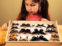 Little Girl Scrutinizes Entomology Collection of Tropical Butterflies. Ttle Girl Scrutinizes Entomology Collection of Tropical Butterflies. Study Theme stock photo