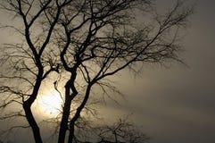 Ttree silhouette Stock Photos