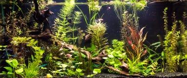 Ttropical zoetwateraquarium met vissen Stock Fotografie