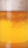 tätt exponeringsglas för öl upp Royaltyfria Bilder