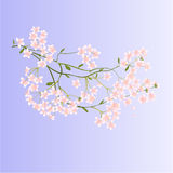 TTwig with small flowers vector Stock Images