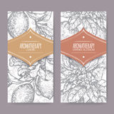 Ttwo labels with Orange blossom and lemon branch sketch Royalty Free Stock Image