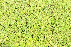 Texture background. Building background. Green background. Ttxture background. Building background. Green background. For user selection. zhaofuxin 2017.9 royalty free stock photos