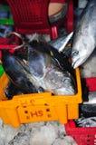 Tuńczyk jest zbierający i sortujący w kosze po długiego dnia połowu w Hon Ro porcie morskim, Nha Trang miasto Zdjęcia Stock