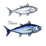Tuńczyk ryba nakreślenie z atlantyckim bluefin tuńczykiem ilustracji