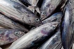 tuńczyk Obrazy Stock