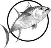 tuńczyk Zdjęcie Stock