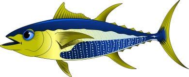 tuńczyk Obraz Stock