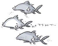 Tuńczyk ryba Fotografia Stock