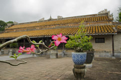 Tu Duc Tomb near Hue, Vietnam. Hue, Vietnam, Decemder 16, 2012. Tu Duc Tomb and flower royalty free stock photo