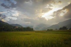 Tu Le Rice dolina na żniwo sezonie Fotografia Royalty Free
