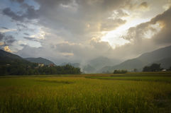 Tu Le Rice valley on harvest season Royalty Free Stock Photography