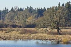 Tualatin krajowy rezerwat dzikiej przyrody Oregon. obrazy stock