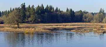 Tualatin national wildlife refuge Oregon. royalty free stock photography