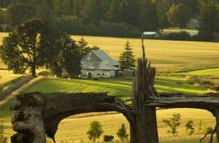 Tualitin Bauernhöfe Lizenzfreies Stockbild