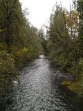Tualitin flod Arkivfoton
