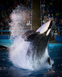 Tuar - SeaWorld Texas Stock Afbeelding
