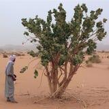 Tuareg κοντά σε ένα δέντρο procera στοκ φωτογραφία με δικαίωμα ελεύθερης χρήσης