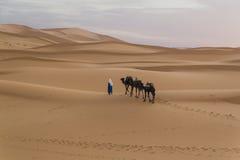 Tuareg Fotografering för Bildbyråer