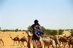 Tuareg camel driver, Mauritania Royalty Free Stock Image