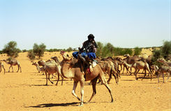 Tuareg camel driver, Mauritania. Tuareg camel driver welcomes the participants of Budapest - Bamako Rally Stock Image