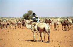 Tuareg camel driver, Mauritania. Tuareg camel driver welcomes the participants of Budapest - Bamako Rally. Budapest - Bamako Rally is held yearly leaving Stock Photo