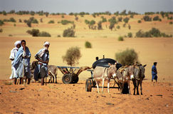 Tuareg people, Mauritania. Tuareg people in the desert with their animals Stock Image