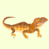 Tuatara蜥蜴 库存照片