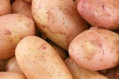 Tubérculos de batatas cruas novas imagens de stock