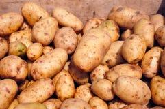 Tubérculos de batatas novas Fotos de Stock Royalty Free