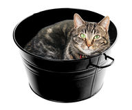 Tub Full of Tabby Royalty Free Stock Photo