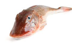 Tub gurnard - gallinella di mare Royalty Free Stock Photos