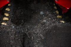 Tub?rculos da batata e m?quina do cultivador nos sulco em um campo da batata imagem de stock