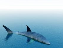 Tubarão 2 Fotografia de Stock