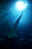 Tubarão Fotos de Stock