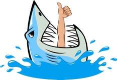 Tubarão branco Fotos de Stock Royalty Free