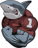 Tubarão branco irritado Imagem de Stock Royalty Free