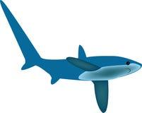 Tubarão de debulhadora ilustração stock