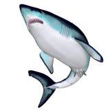 Tubarão de Maco Fotografia de Stock
