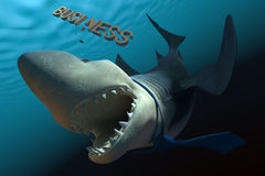 Tubarão do negócio Foto de Stock Royalty Free