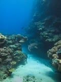 Tubarão do recife no grande recife de barreira Austrália imagem de stock royalty free