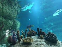 Tubarão na água do mar imagem de stock royalty free