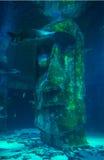 Tubarão no aquário de Londres imagens de stock