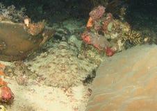 Tubarão que tem um descanso Fotografia de Stock