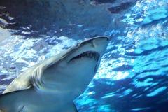 Tubarão sob a água foto de stock royalty free