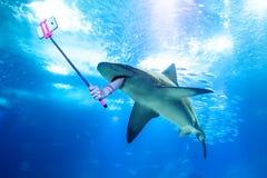 Tubarão subaquático do selfie fotografia de stock