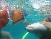 Tubarão tocante do menino em belize América Central imagem de stock royalty free