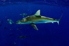 Tubarões! Fotos de Stock