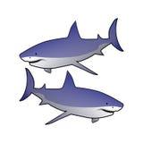 Tubarões Fotografia de Stock